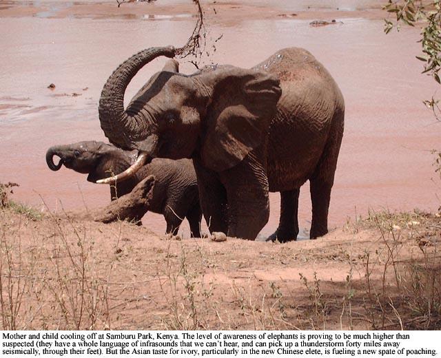 Elephants in Samburu Park, Kenya